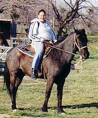 horse horse horse horse horse